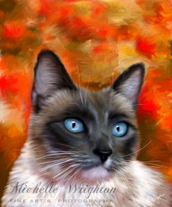 Fire and Ice Siamese Cat
