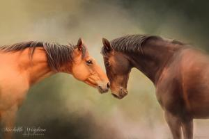 Best Friends – Two Horses