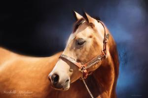 Buckskin On Blue Fine Art Horse