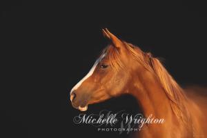 Soulful Gaze of a Horse