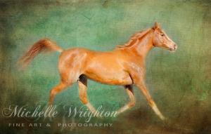 Chestnut Arabian Horse Trotting
