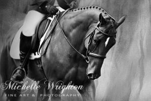 Elegance – Dressage Horse