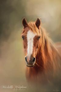 Everyone's Favourite Pony