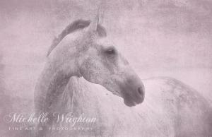 Grey Horse With Pink Blush Texture