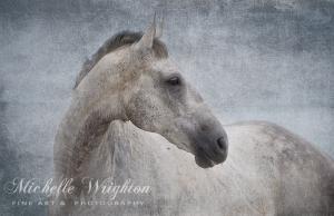 Grey Horse At The Beach