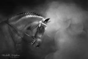 Shadows and Light Fine Art Horse