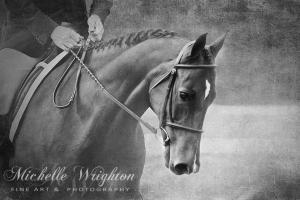 Softly Black and White Horse