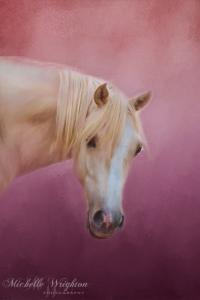 Pretty In Pink – Palomino Pony